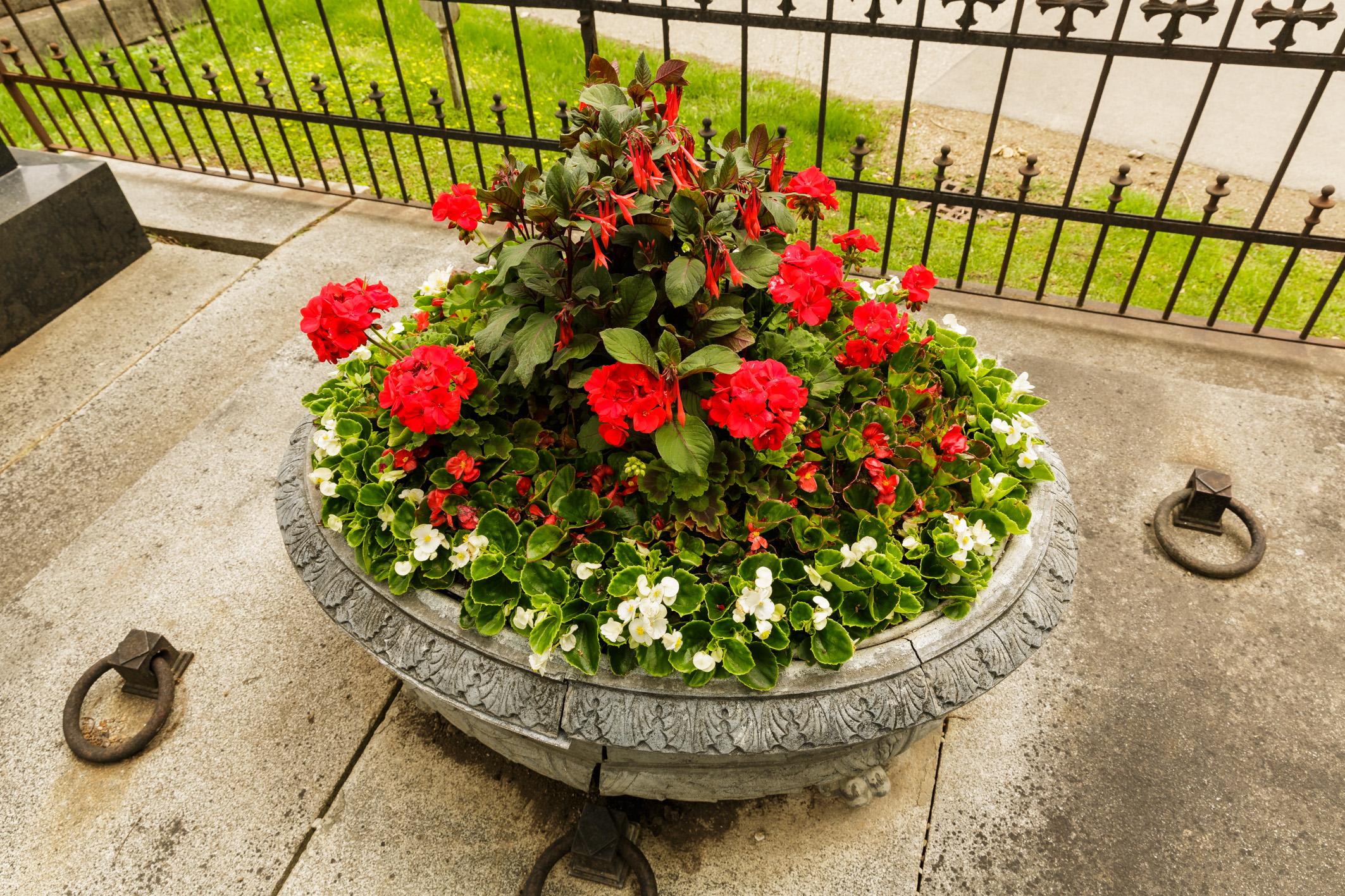 Schale-gross-gemischte-Sommerblumen