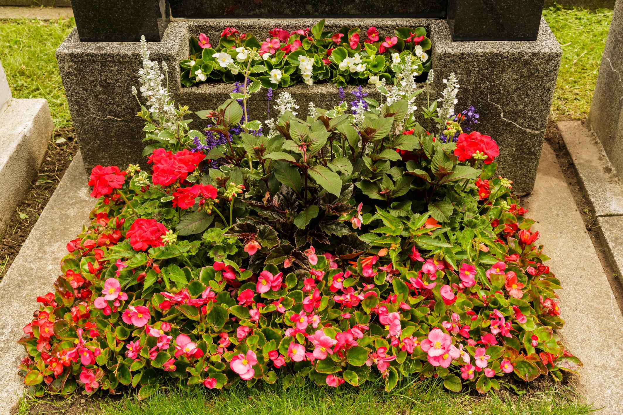 Teilfl-che-und-Jardiniere-gemischte-Sommerblumen